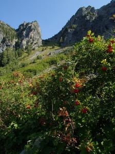 Stujack Pass