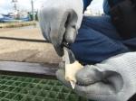 Splitting the siphon