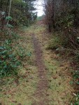 The trail...