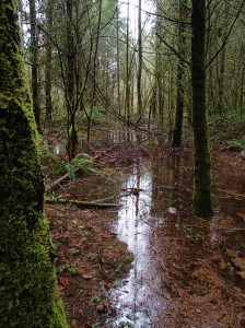 Riparian forest