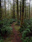 Meandering trails