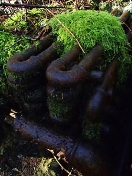 Moss toupee