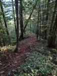 "Trail shot ""Old Trail"""