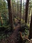 Old trail-trail shot