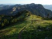 Alta Mountain meadows