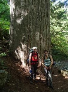 Standard tree photo